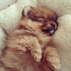 Pooped-out Pom!!