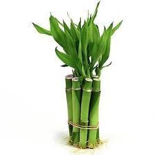 vert version planches décoration mariage zen bambou vert version ...