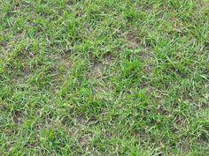 Como restaurar as falhas de um gramado