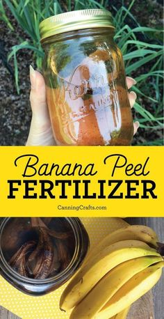 Banana Peel Compost Tea Garden Fertilizer | Give your garden a boost with nutrients like Potassium & Phosphorus that plants crave | Use peels fresh, dried, or as compost tea |CanningCrafts.com #gardening #gardeningtips #compost
