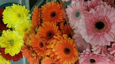 Flores primavera colores