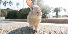 うさぎと触れ合う癒し旅|大久野島のうさぎ|広島県公式観光サイト ひろしま観光ナビ