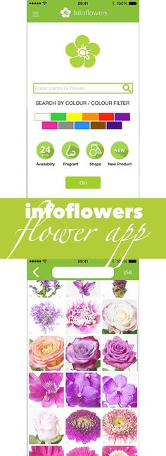 Searching for that one purple flower for a Bloomy Arrangement?  Enjoy lots of flower information simply on your device with the InfoFlowers app. It's a super easy flower tool.