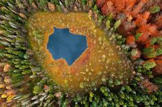 L'incroyable Forêt polonaise de Kacper Kowalski (5)