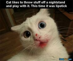 Top 40 Funny Cat Pictures 2017 - Cats are so funny