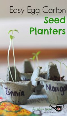 Get your kids into gardening and reusing with these simple egg carton seed starters!