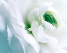 White Ranunculus | Colorful Bokeh Bright Summer Spring Garden Magical Dreamy Wedding Home Zen Decor | Fine Art Nature Photography