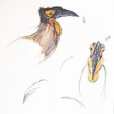 Zuidelijke hoornraaf Pictures To Draw, Rooster, Bird, Drawings, Animals, Animales, Animaux, Birds, Sketches