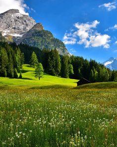 Austria 🇦🇹 Swiss Alps, Zurich, Happy Friday, Wild Flowers, Golf Courses, Swiss Switzerland, Europe, Vacation, Mountains