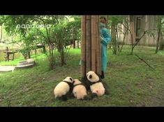 Cubs and nanny's hide and seek - YouTube