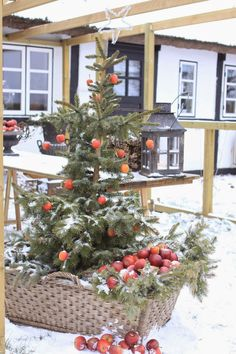 Charming Christmas: Christmas Tree... the birdies, bunnies & squirrels in my yard would love that.