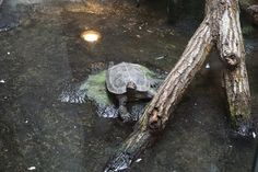 The model of the Zoo, mister Turtle.