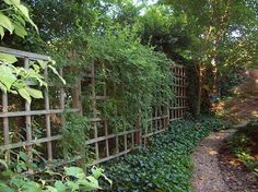 side yard Trellis instead of traditional fence.