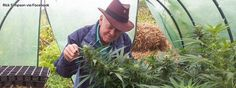 Rick Simpson and his Cannabis Oil as Cancer Cure! Without this person, today many people probably would not use successfully cannabis oil for healing. Rick Simpson tells everyone that he didn't actually invent cannabis oil but...find more here:  http://worldhealthchoice.com/rick-simpson-cannabis-oil-cancer-cure/