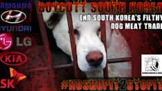 South Korea's President Moon Jae-In: Let's stop supporting South Korea's economy until they STOP THE FILTHY DOG/CAT MEAT TRADES