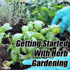 Getting Started With Herb Gardening
