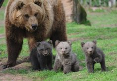 Bears.... Just look at how flippen cute those babies are!