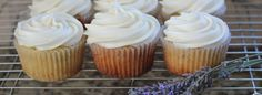 Honey lavender cupcakes with a honey cream cheese frosting...SHUT THE FRONT DOOR!!!