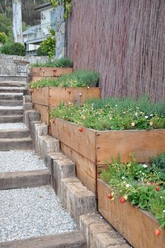 Strawberries along gravel path.Brooke and Steve Giannetti design.