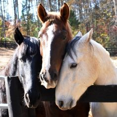Your horse is your greatest partner and he always wants to be right by your side. | 21 Reasons Your Horse Is Always The Best Present