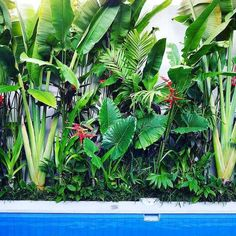 30 Top Tropical Garden Ideas 30 Top Tropical Garden Ideas 30 Top Tropical Garden Id . - 30 top tropical garden ideas 30 top tropical garden ideas 30 top tropical garden id …, - Small Tropical Gardens, Tropical Garden Design, Tropical Plants, Plants By The Pool, Hawaiian Plants, Exotic Plants, Tropical Backyard Landscaping, Florida Landscaping, Landscaping Ideas