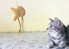 Cats who spend inside the confines of home with no structured interactive play activities are often forced to seek less beneficial options to pass Diy Cat Toys, Kitty Games, Cat Behavior, Animal Projects, Indoor, Entertaining, Activities, Pets, Winter