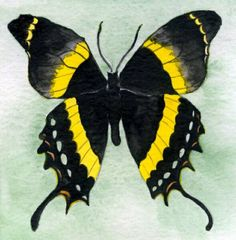Google Image Result for http://www.shanatate.com/Black-yellow_butterfly_op_590x600.jpg