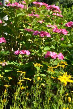 #UrbanGardening #Berlin im Juli Urban Gardening, Berlin, Plants, City Gardens, Urban Homesteading, Plant, Apartment Gardening, Planting, Planets