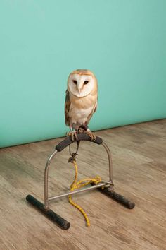 Photography: Luke Stephenson focusses on owls for Agi & Sam's football-themed Topman collection Still Life Photographers, Beautiful Color Combinations, White Backdrop, Cockatoo, Beautiful Birds, Colorful Backgrounds, Backdrops, Old Things, The Incredibles