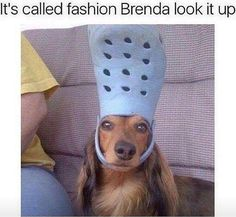 Stop trying to make fetch happen - it's not going to happen. . #crocs #dogsofinstagram #instastyle #instafashion #meangirls #styleicon #justjealous #damnitbrenda