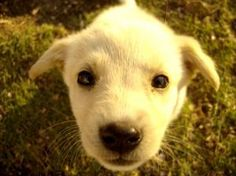 """Puppy House Training Process - Teaching Your Puppy To """"ask"""" To Go Outside"""