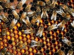 How to Make Food Supplements for Your Honey Bees
