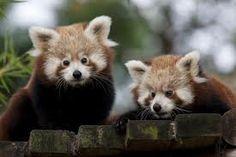 schattige baby dieren - Google zoeken