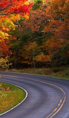 Skyline Drive in Shenandoah National Park, Virginia •