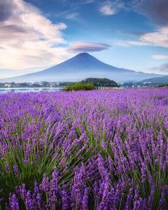 Geisha Japan, Fuji, Mountains, Gallery, Nature, Photography, Travel, Naturaleza, Photograph