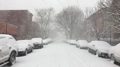 Snow day! Feb. 9 saw the five boroughs blanketed in the fluffy white stuff.