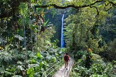 Akaka Falls State Park-I was just there :)