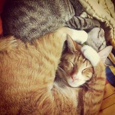 Cat contortionists.