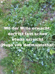 Wo der Wille erwacht, dort ist fast schon etwas erreicht. (Hugo von Hofmannsthal) Wille, Hugo, Plants, Mathematical Analysis, Giving Up, Happy Life, Quotes, Plant, Planets