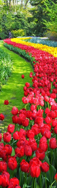 Best tours & activities in Amsterdam. Book now to avail great discounts & best prices.