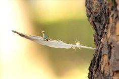 Sulle #ali del #mondo - #feather #tree #green #nature #plants #trunk