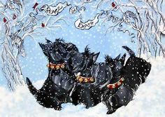 Scotties in snow