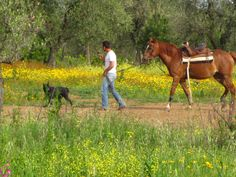 #maremma #horse #man end #dog #colors #nature