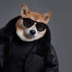 The 14 Most Fashionable Shiba Inu You Ever Seen Shiba Inu, Akita, Cute Funny Animals, Funny Dogs, Menswear Dog, Pugs, Doge Dog, Dog With Glasses, Dog Presents