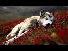 ♫ WAYRA ~ Yesterday ~ ♪ Album The Wolf Dance ♪ Native American