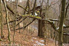 Die Krux mit dem Frühlingsbeginn - Ist es der 1. März, der 19., 20. oder doch der 21.? Wann beginnt der Frühling denn nun wirklich? Der NP Thayatal Blog hat die Antworten dazu! http://blog.np-thayatal.at/
