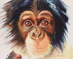 """""Chimpanzee"" Watercolor"" by Paul Jackson 