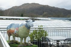 On top of the world! Ms Todd from the Go Herdwick Public Art Trail in the Lake District, on the balcony outside the cafe at Hayes Garden World