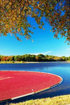 Cape Cod Cranberry Bog, by Matt Suess Photographer Great Places, Places To See, Beautiful Places, Amazing Places, New Hampshire, Rhode Island, Connecticut, Vermont, Cranberry Bog