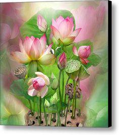 Spirit Of The Lotus - Sq Canvas Print / Canvas Art By Carol Cavalaris